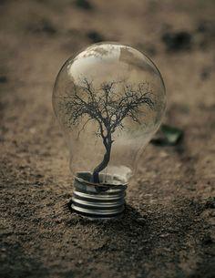 New Bulb have Flourished Creative Photo Manipulation