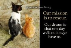 May there be no more homeless animals in the world.