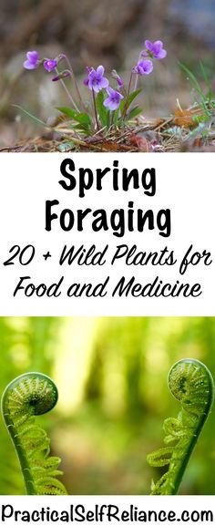 Herbal Medicine Spring Foraging ~ 20 Wild Edibles to forage for food and medicine - Foraging is a great excuse to get outside and reconnect with nature in the first Healing Herbs, Medicinal Plants, Edible Wild Plants, Living Off The Land, Wild Edibles, Survival Food, Survival Tips, Wilderness Survival, Growing Herbs