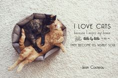 Our best feline friends have inspired some unforgettable quotes over the years.