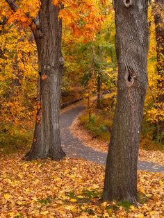 This is what my driveway looks like in the fall
