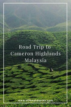 A comprehensive guide to driving to Cameron Highlands, renting cars, and things to take note of before your road trip! Cameron Highland is the perfect destination for short getaways and amazing road trips! Get a headstart on your road trip planning now! Malaysia Travel, Singapore Travel, China Travel, Bali Travel, Kuala Lumpur, Road Trip Hacks, Road Trips, Petronas, Tokyo Japan Travel