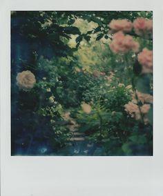 polaroid | Tumblr