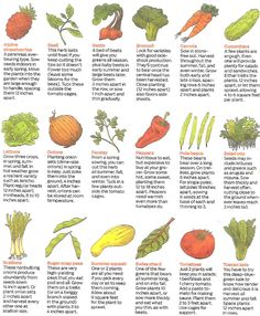 Easy Vegetables to Grow