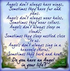 Angels don't always have wings, sometimes they have fur and paws. Angels don't always wear halos, sometimes they wear collars. Angels don't always sleep on the clouds, sometimes they sleep nestled close to us. Angels don't always sing in a heavenly chorus, sometimes they bark and howl. Do you have an Angel in your life?