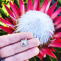 Image result for Rings that look like the protea flower Protea Flower, Flowers, That Look, Engagement Rings, Image, Jewelry, Enagement Rings, Wedding Rings, Jewlery