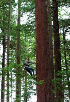 Climbing in the Redwoods, Northern California