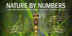 NATURE BY NUMBERS. A SHORT MOVIE INSPIRED ON NUMBERS, GEOMETRY AND NATURE · BY CRISTÓBAL VILA · 2010