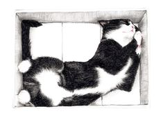 « Katze im Karton » par Janine Sommer | #Animaux #Animauxdomestiquesetdelaferme #Chats #Artpourenfants #Blanc #Noir #JUNIQE | Plus daffiches sur www.juniqe.fr Art Mural, How To Draw Fur, Poster Online, Handmade Stuffed Animals, Create Collage, Affordable Wall Art, Old Magazines, Love Drawings, Animaux