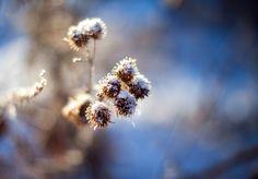 Мороз и солнце, день чудесный!  . #утро #люди #россия #фото #урал #южныйурал #chelyabinsk #russia #челябинск #chel #Че #суровыйЧелябинск #мороз #зима