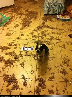 funny dog pictures - Aliens?