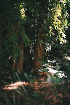 Navarro River Redwoods State Park, California | A Brown Table