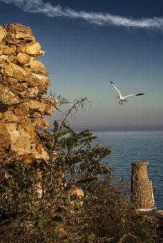Landing gull - Tarragona October 2015.f14; 1/60s; ISO 100;...