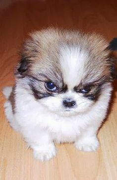 She looks so angry :) 10 best Puppy pictures of all times