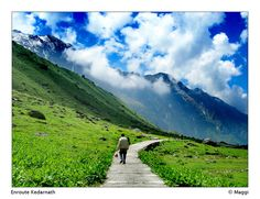Kedarnath, Uttarakhand, India