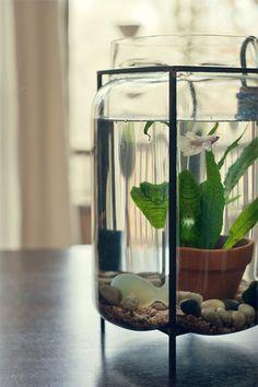 大型の瓶だと小さな鉢も入れられて、グッと水槽感が出ますね。