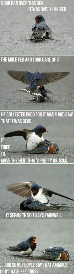 Even birds have feelings