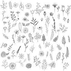 Collection De Fleurs Dessinés à La Main Hand gezeichnete Blumen Sammlung Free Vector Doodle Inspiration, Bullet Journal Inspiration, Doodle Drawings, Doodle Art, Botanical Line Drawing, Bujo Doodles, Hand Drawn Flowers, Plant Drawing, Flower Doodles