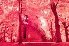 Türkenschanzpark #Vienna #Tuerkenschanzpark #park #infrared #trees #experimental Park, Vienna, Trees, Abstract, Artwork, Pictures, Painting, Summary, Photos