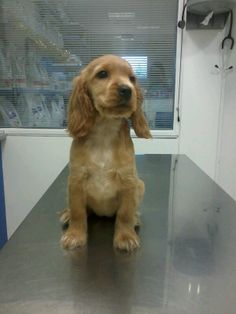 Sora el día de su primera vacuna en nuestra clínica veterinaria