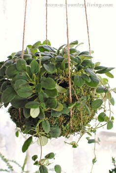 Most of us know that plants purify the air and so we bring them into our home. They lend beauty, texture, and health benefits. Unfortunately, they often come in plain plastic pots. Today I'm sharing a few creative ways for upgrading houseplants to give them a customized look.