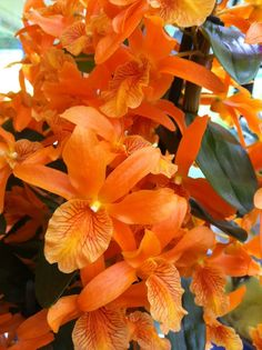 ooh...orange orchid hybrid :)