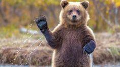 Петиция · Государственная Дума и Президент РФ: Ужесточить наказание за жестокое обращение с животными · Change.org