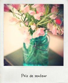 pois de senteur, champetre, très joli. Voir le lien pour voir toutes les fleurs du mois d aout!