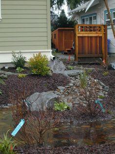 Rain Garden- ideas for redirecting rain water into the garden
