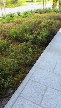 Kuntta Stone Landscaping, Detached House, Habitats, Outdoor Gardens, Outdoor Living, Sidewalk, Stones, Outdoors, Landscape