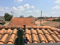 Boba sur les toits