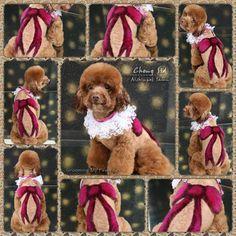 Creative grooming by Betty from Aishin Pet Grooming School! -OPAWZ