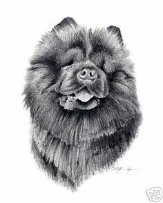 3958ec8f2c4 CHOW CHOW Dog Pencil ART 11 X 14 LARGE Print Signed DJR  Realism   chowchowdog