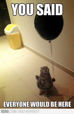 :) poor baby #cat