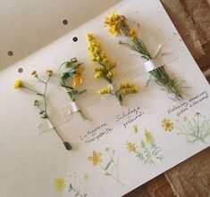 """Need that nature journal! """"Cataloging yellow wildflowers used for natural dyes. Yellow Wildflowers, Yellow Flowers, Flora Flowers, Art Hoe Aesthetic, Aesthetic Yellow, Aesthetic Drawing, Flower Aesthetic, Arte Sketchbook, Deco Originale"""