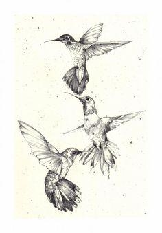 Hummingbird tat possibilities