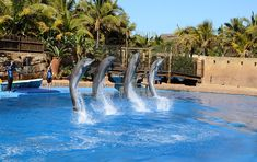 uShaka Marine World is a theme park which was opened on 30 April 2004 in Durban, KwaZulu-Natal, South Africa. Florida Hotels, Beach Hotels, South Africa Beach, Tropicana Hotel, Best Amusement Parks, Riverside Hotel, City By The Sea, Kwazulu Natal, Live
