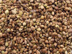 Succo di semi di canapa