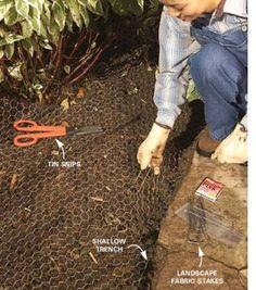 Stop dogs from digging in garden beds