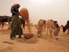 West African Food Crisis 2012: Niger, via Flickr.