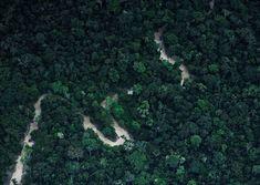 Survival in the Amazon - Photos - The Big Picture - Boston.com