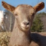 Give a membership to The Woodstock Farm Animal Sanctuary as a favor to attendants or guests or as a gift to the couple. http://woodstocksanctuary.org/