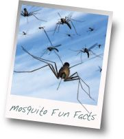 Mosquito Facts & Prevention: All About Mosquitoes #mosquito #dreamyard
