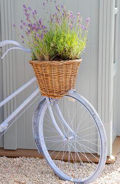 Basket lavender.