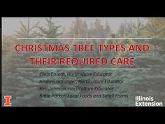 Christmas Trees and Their Required Care - YouTube