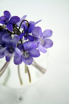 """""""Forgiveness is the fragrance the violet sheds on the heel that has crushed it. """" ~ Mark Twain."""
