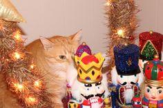 cats christmas lights - Google Search