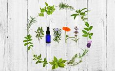 Essential oils are a natural way to kill bad bacteria while preserving and even improving gut health. Get the scoop on 5 essential oil combinations to try.