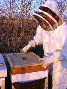 winter bee feeding
