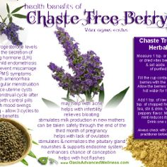 Health Benefits of Chaste Tree Berry